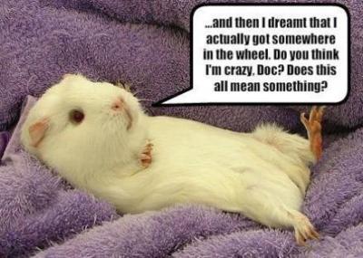 Guinea pig dream interpretation (click to view larger)