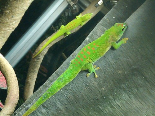 Colorful geckos - Museum of Science, Boston, MA
