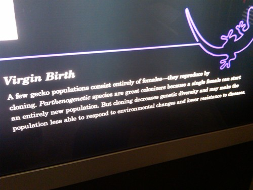 """Virgin birth"" and geckos - Museum of Science, Boston, MA"